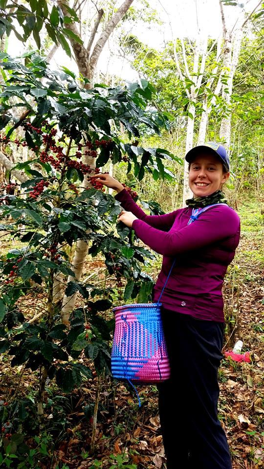 ripe coffee.jpg