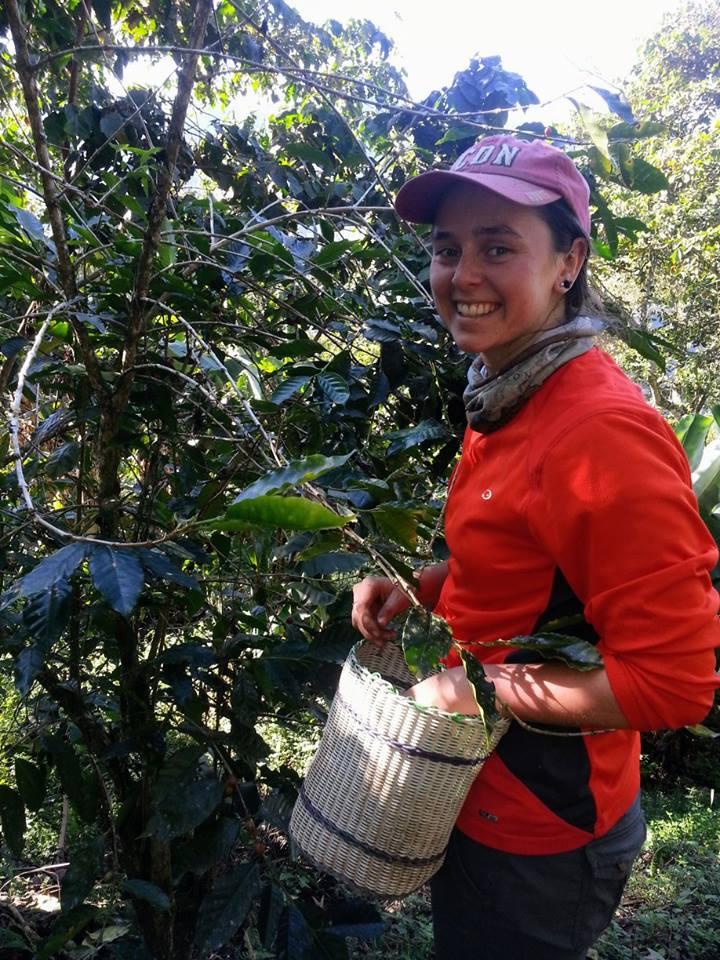harvest volunteer.jpg