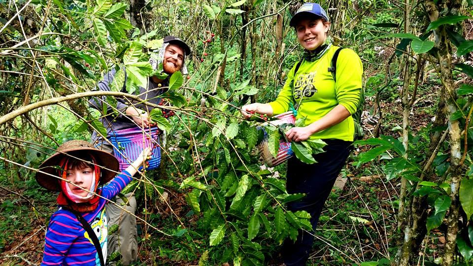harvest volunteers2.jpg