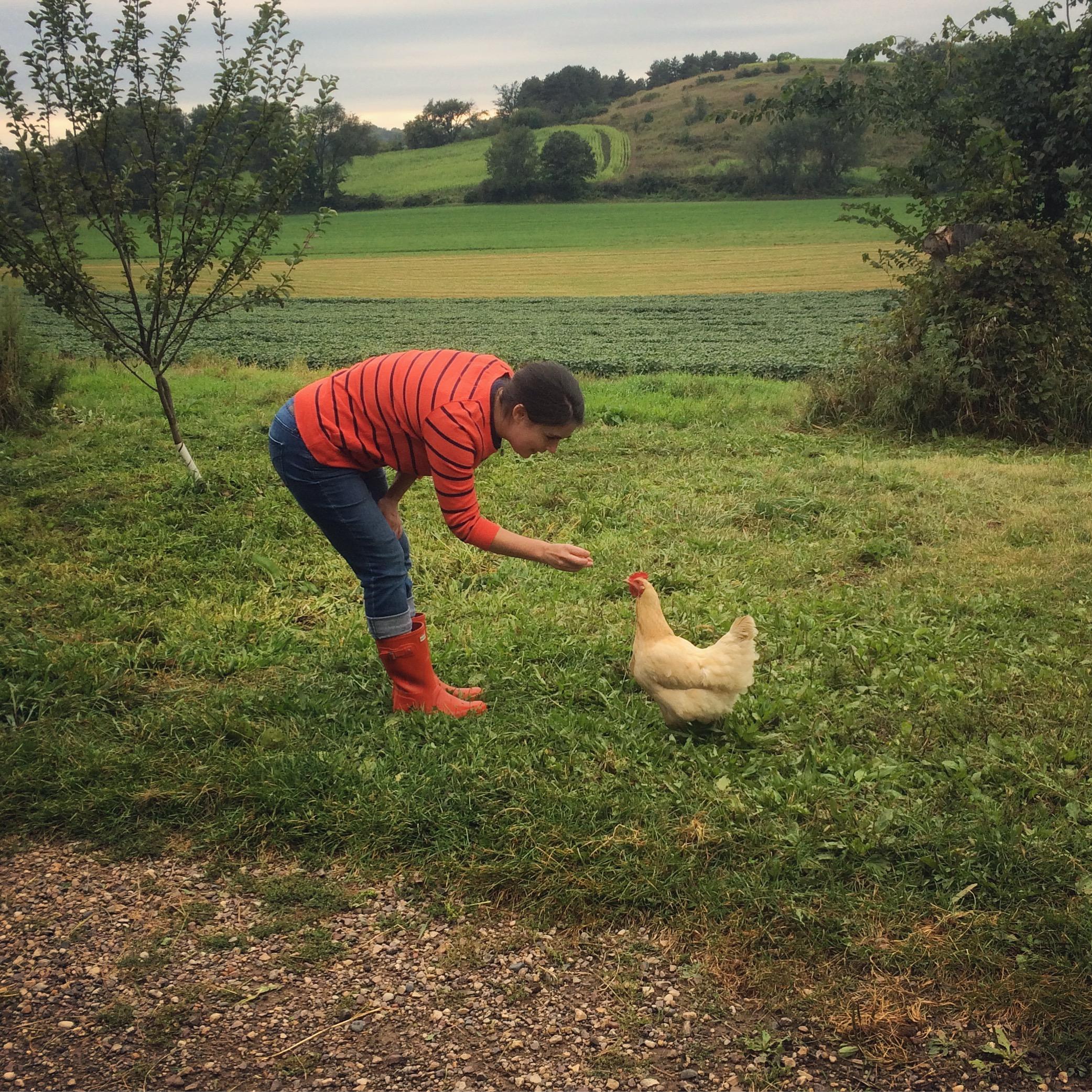 Not my chicken.