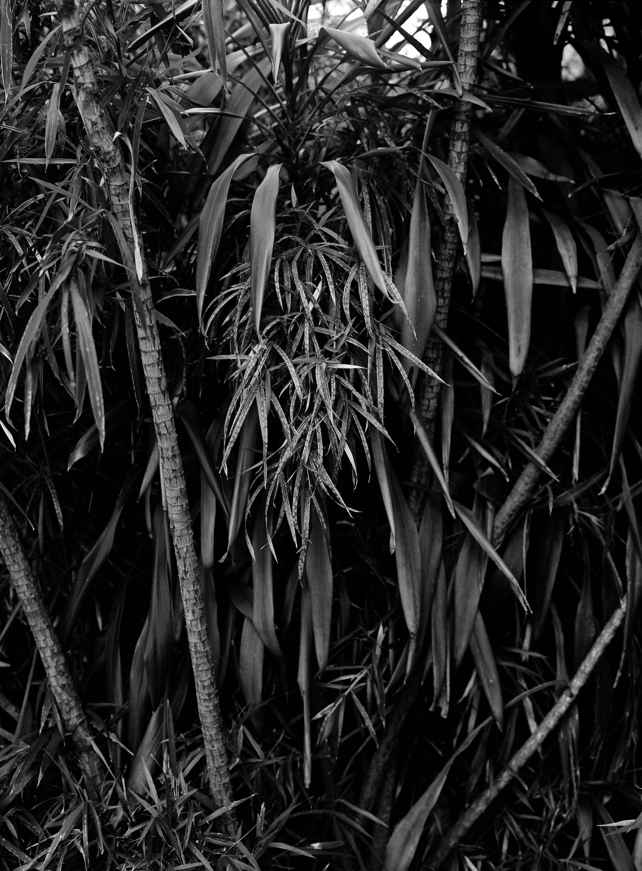 plant_wall.jpg