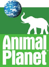 animal planet.png