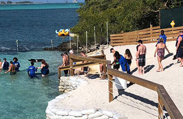 Swimming Pigs Treasure Island - Bahamas