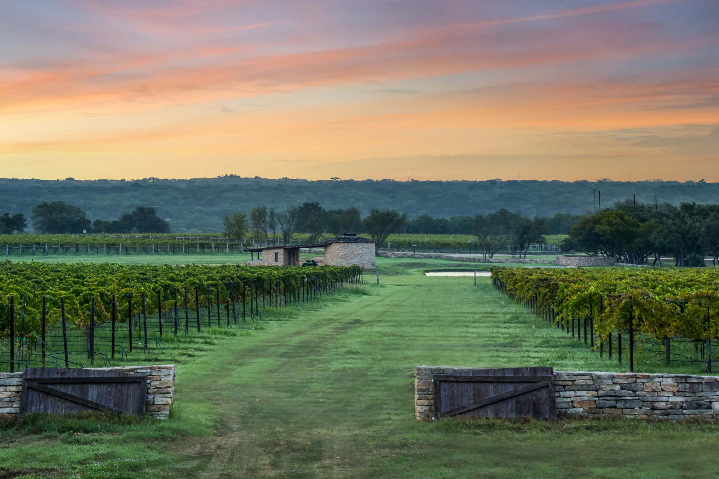 vineyards sunrise.jpg