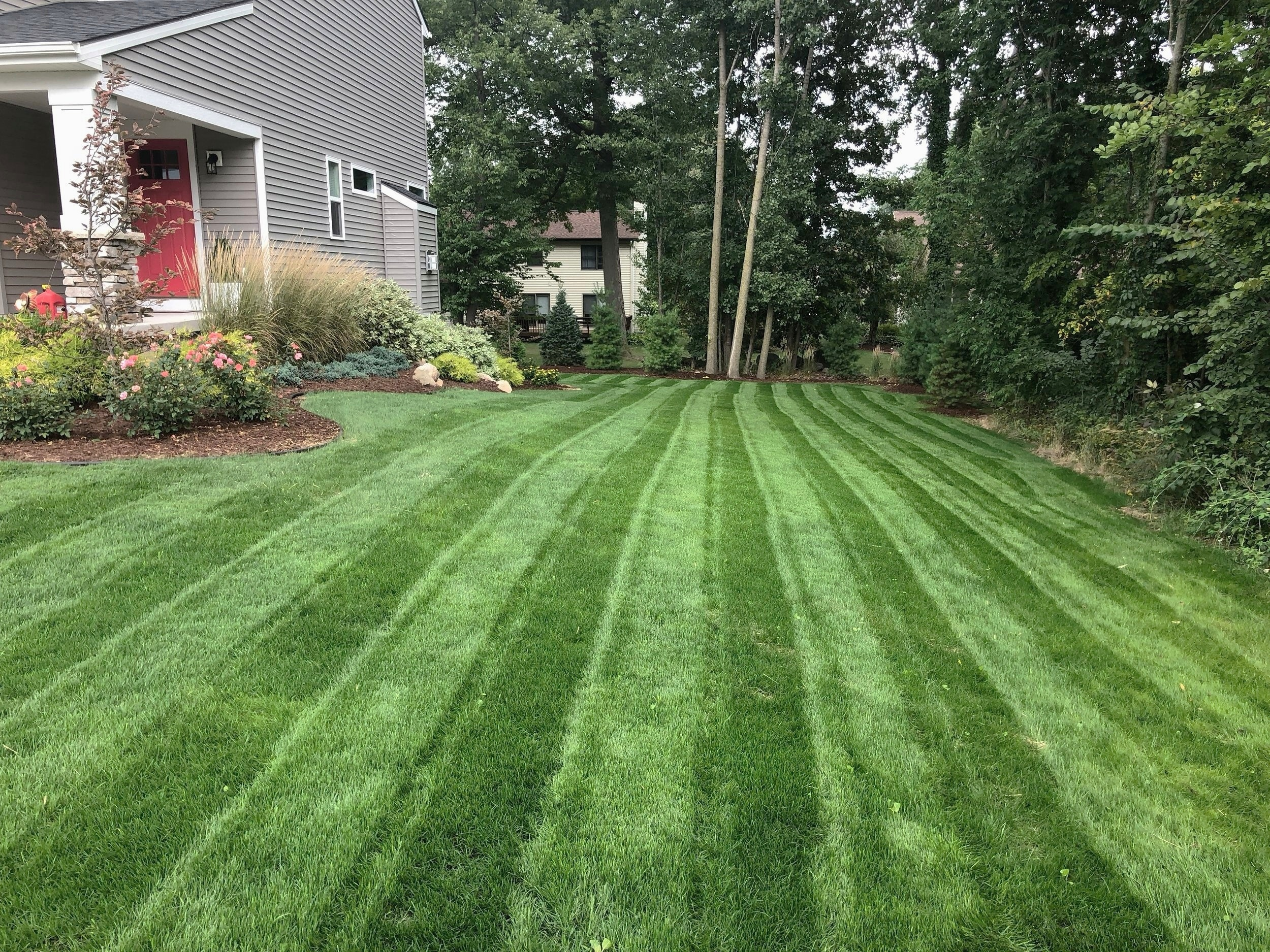 After New Lawn Installation