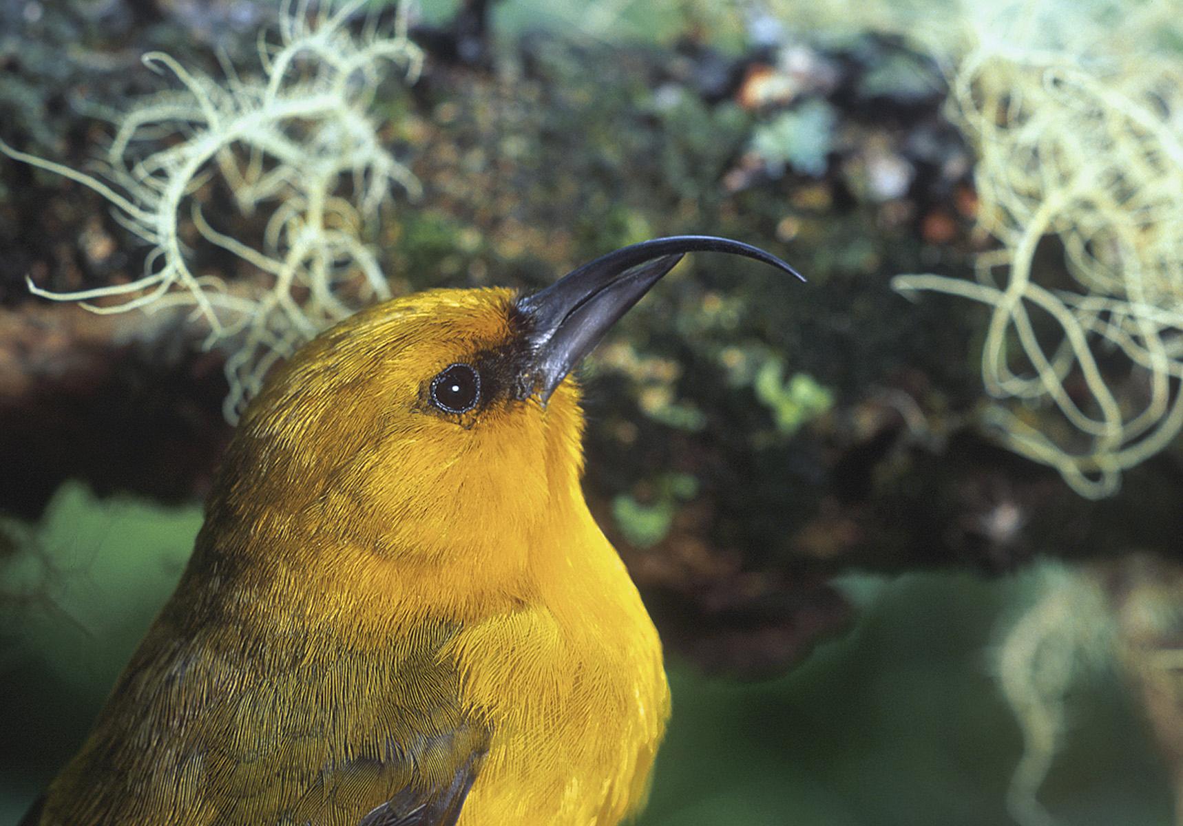 Help Us Save Hawai'i'sRare & Endemic Species -