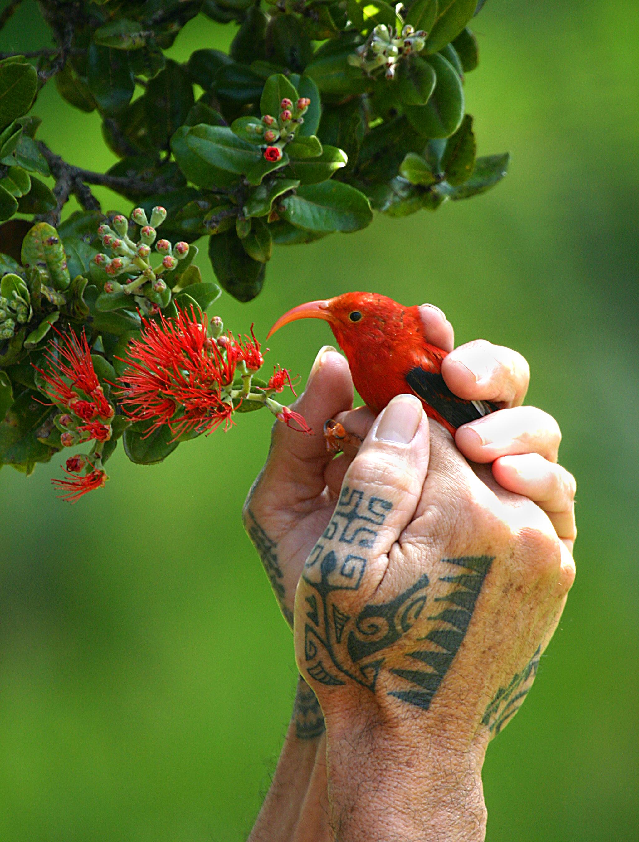 birds00.jpg