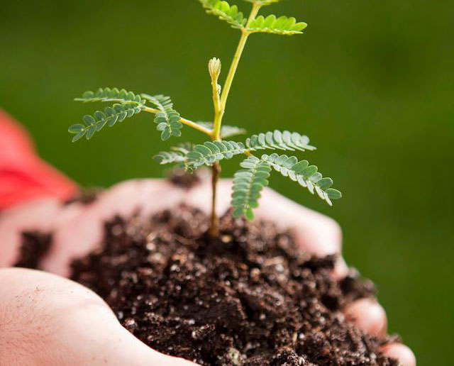 Aloha and welcome to the forest - Be a part of the forest by planting your Legacy Tree today