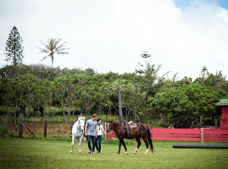 hawaiian-legacy-tours.jpg