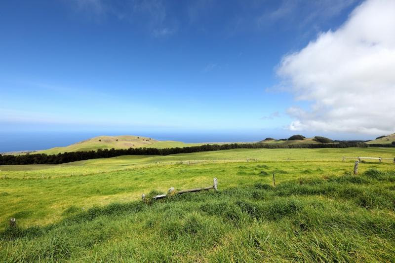 Kahuā Ranch, which spans 8,500 acres on Hawaii Island, will eventually be home to 250,000 newly planted Legacy Trees