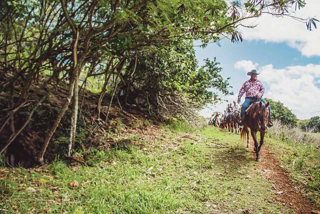 web1_Oahu_LegacyForest6.jpg