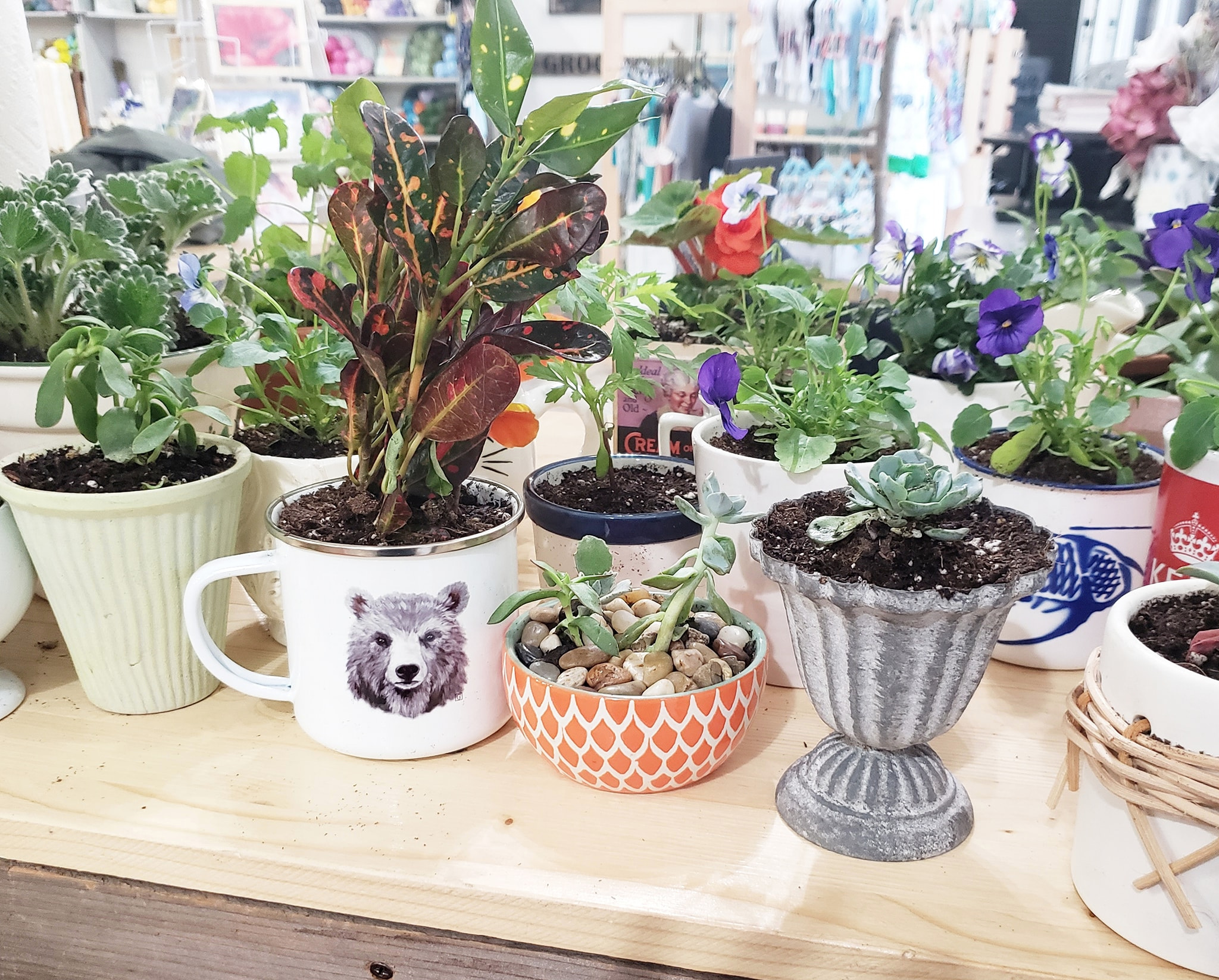 The first 20 customers received free potted plants