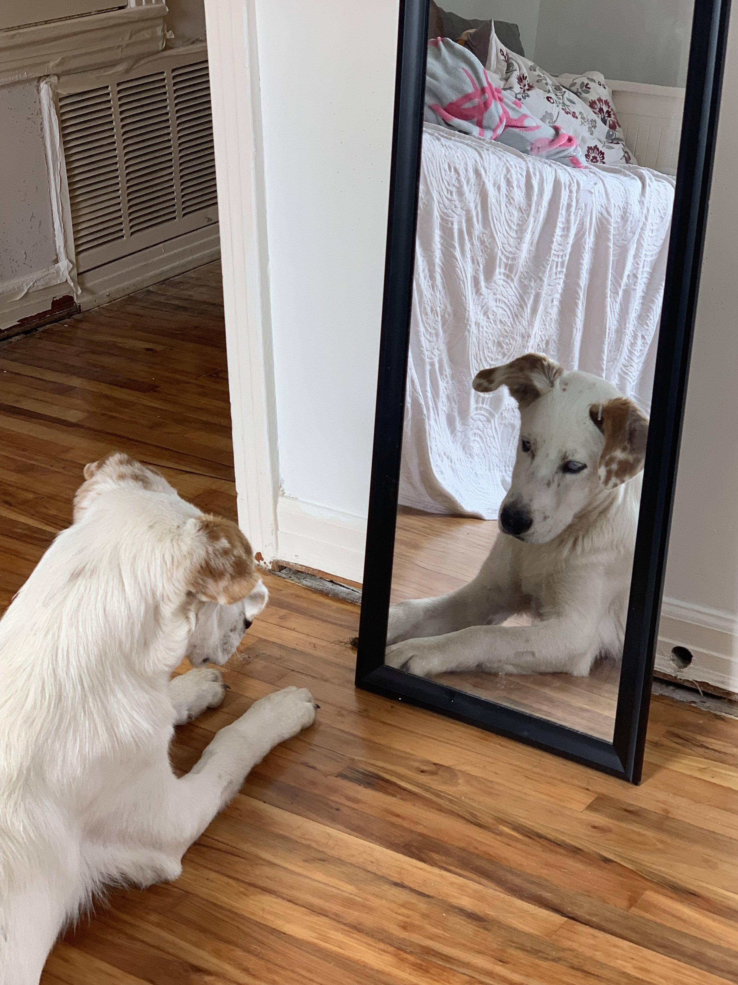 I have caught Tumnus staring into his reflection a number of times. Honestly, I can't blame the bugger. He's pretty cute.