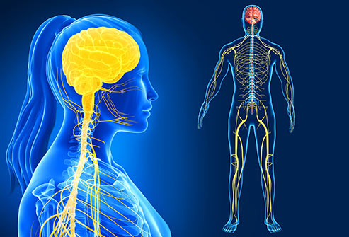 Chiropractic adjustments can affect your nervous system by decreasing pain signals and providing pain relief