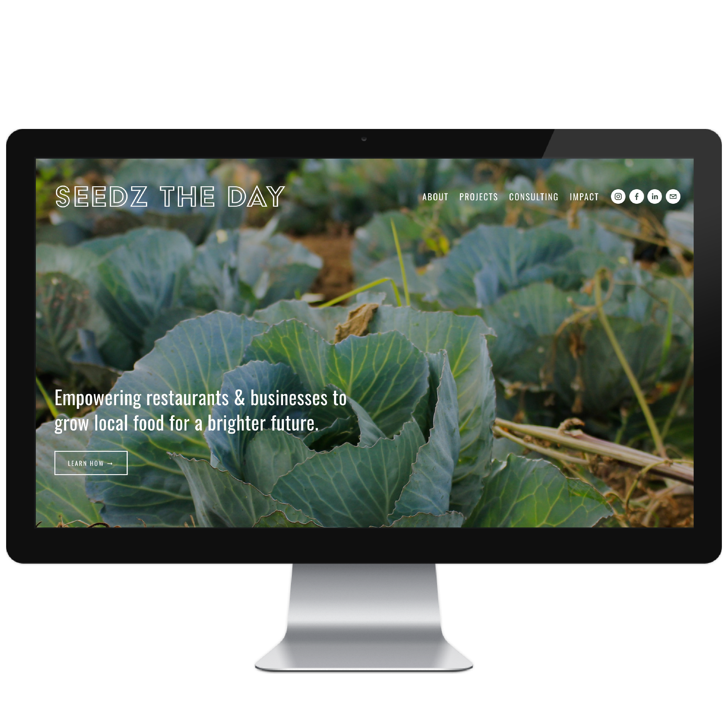 Seedz the Day // Five Design Co. custom Squarespace website design portfolio