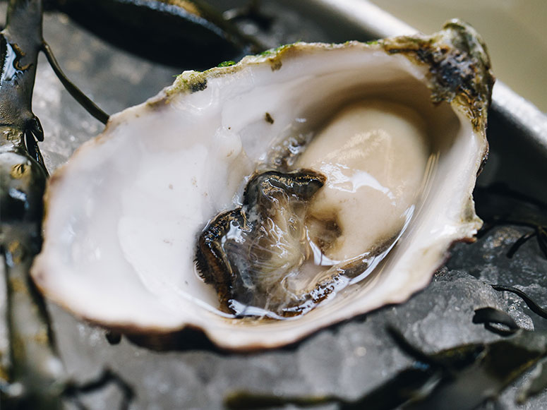 SHUCK-OF-THE-MONTH.jpg