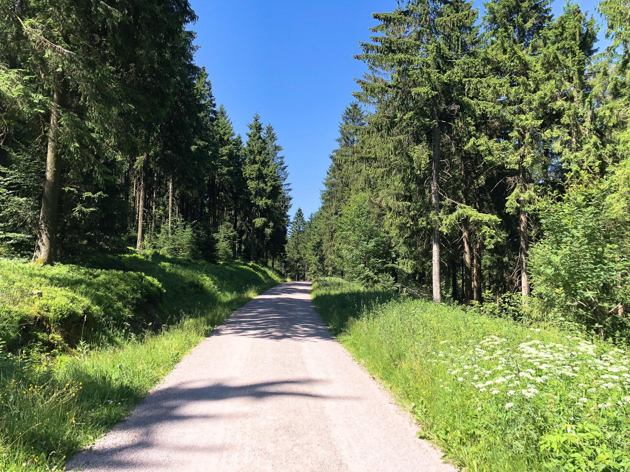 Wandern & Wellness im Thüringer Wald