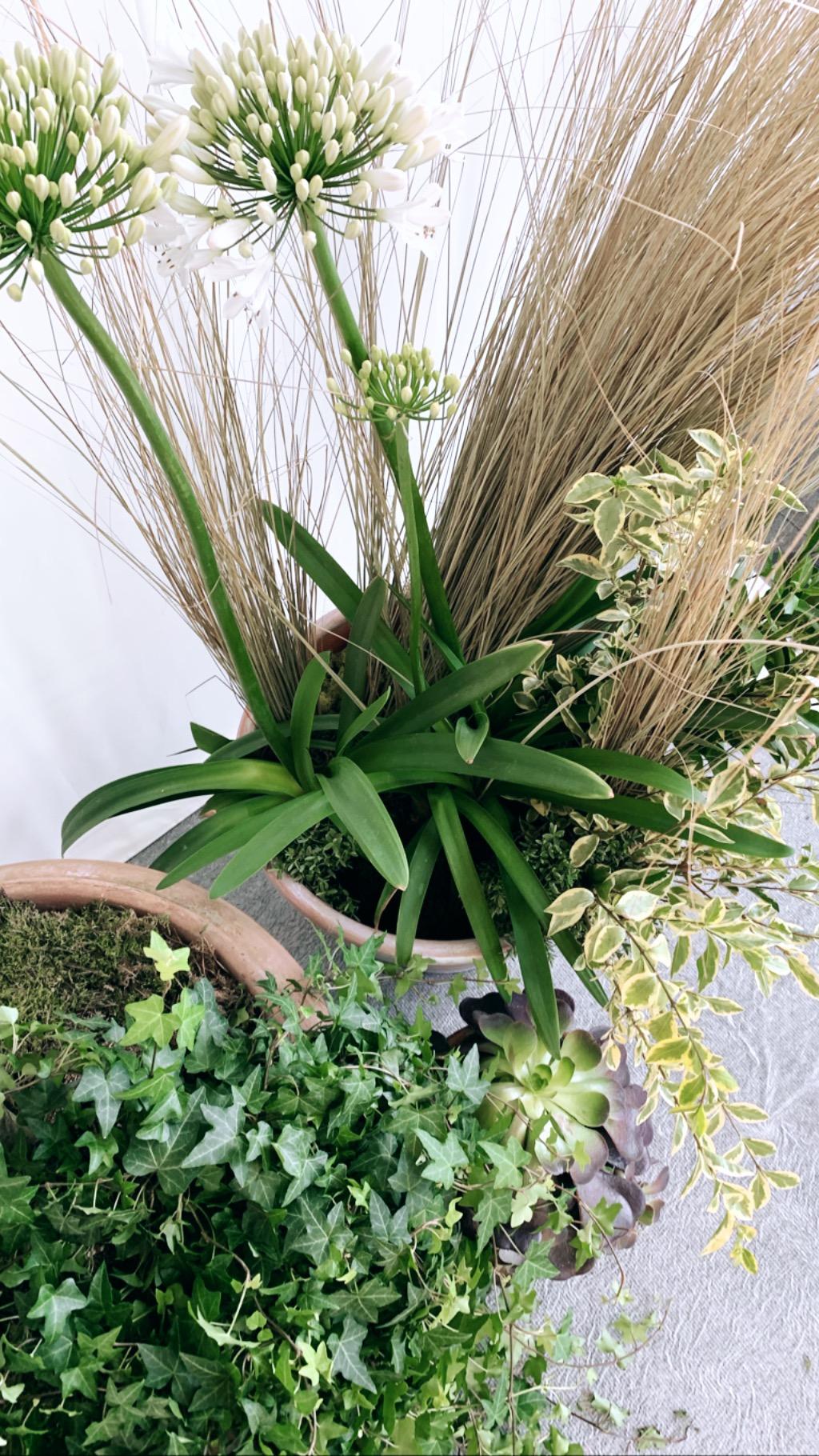 Henley Regatta Flowers
