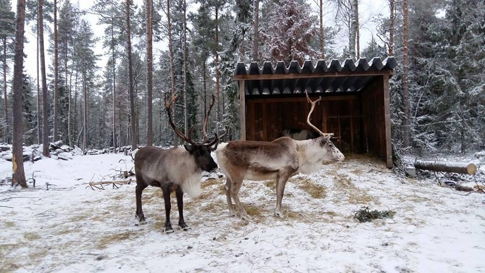 Pentti ja Matti talvimaisemassa.jpg