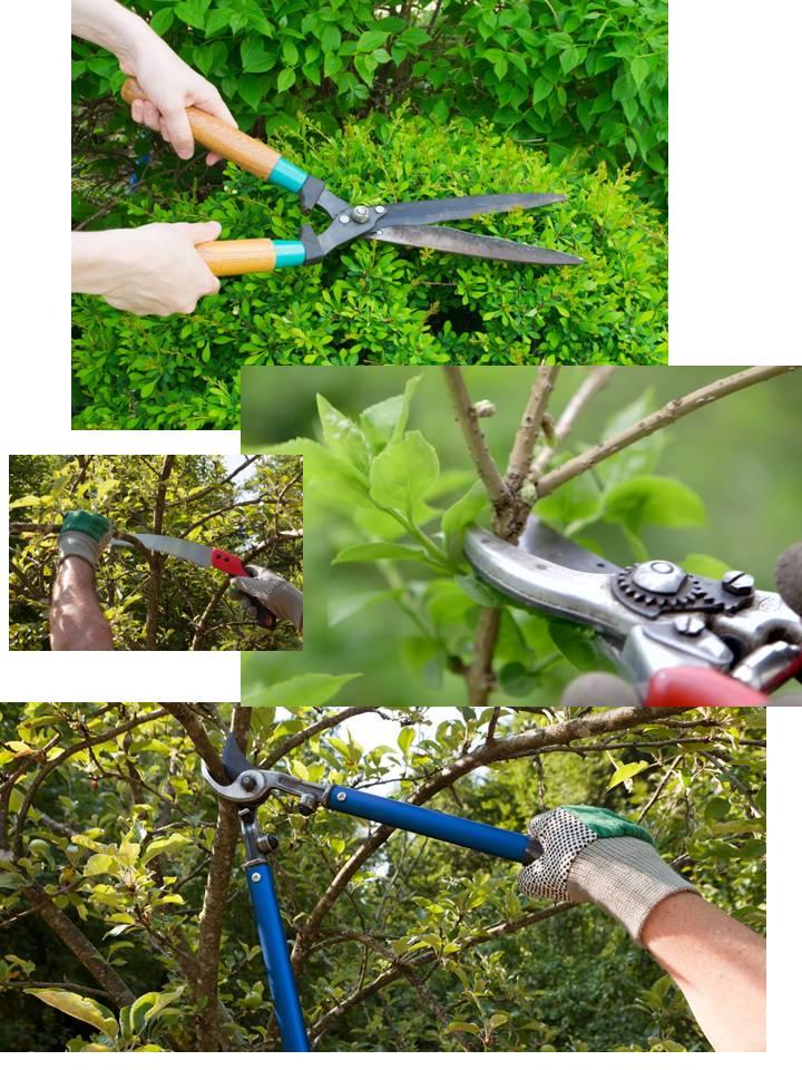 Pruning Guidelines -
