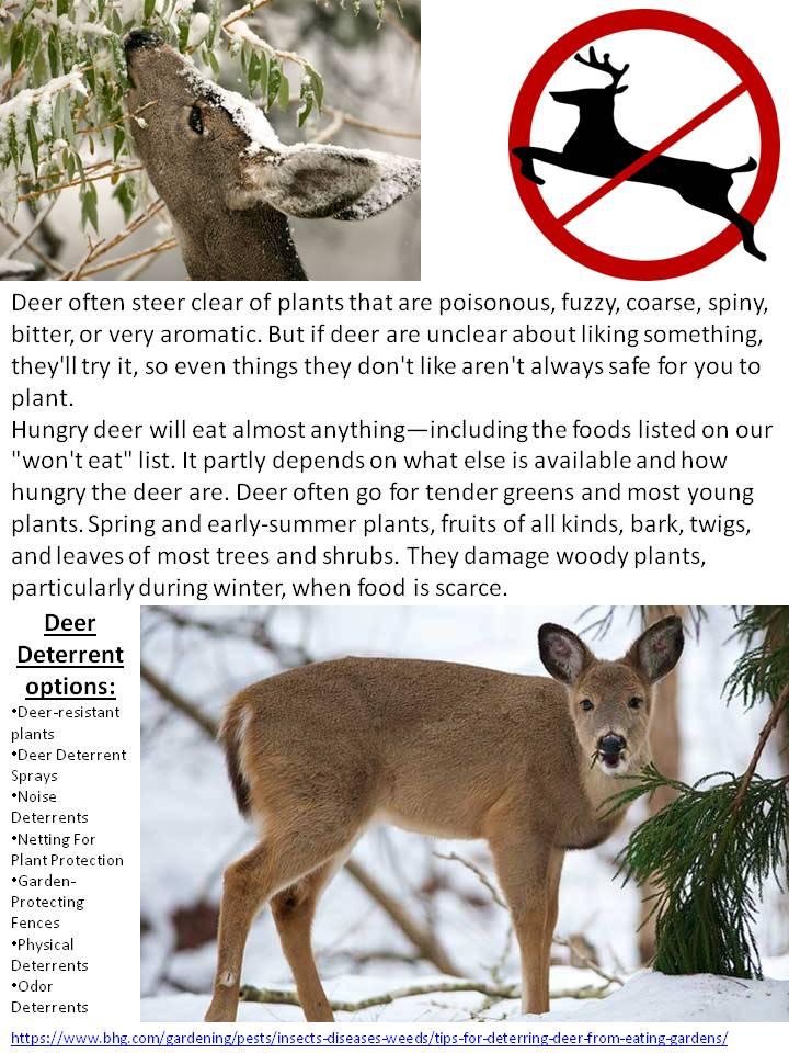 Deer Deterrent Options