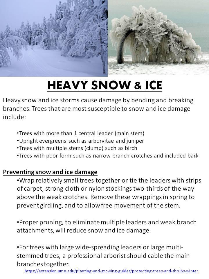 Heavy Snow and Ice