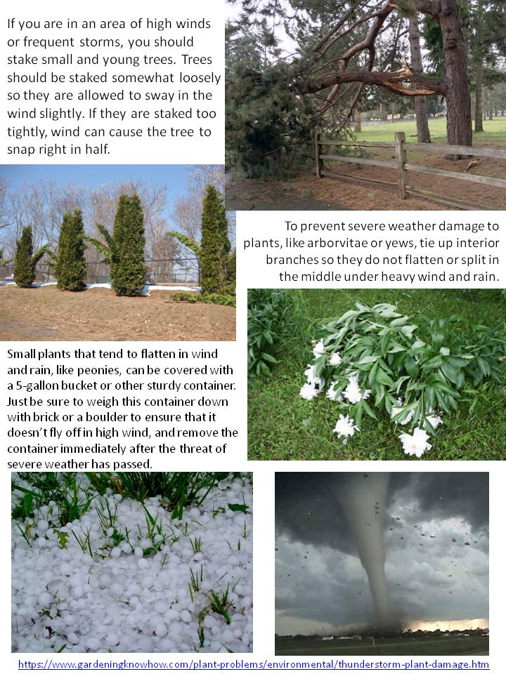 Weather Damage