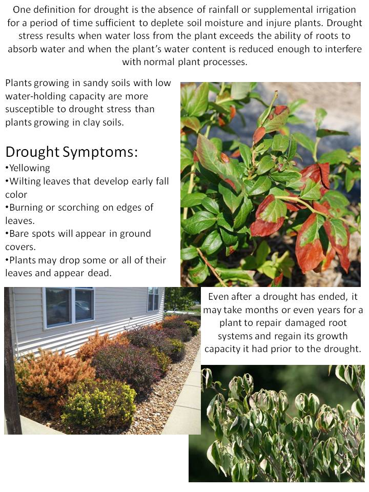 Drought Damage