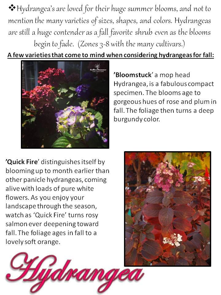 Fall- Hydrangea.jpg