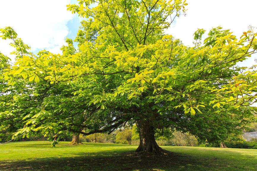chestnut4567.jpg