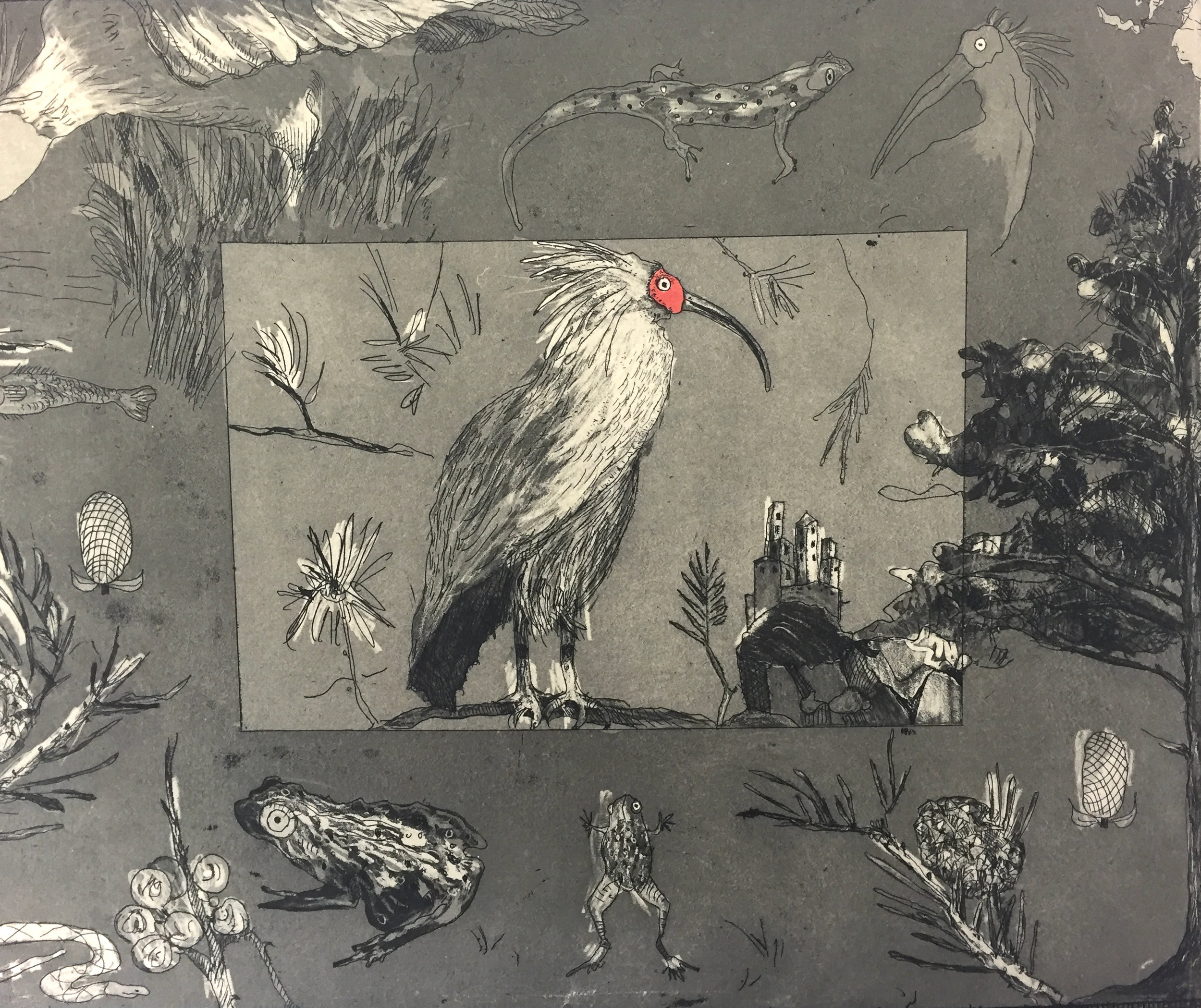 "14"" x 18.""  The crested Ibis in on the endangered specie list. Print fashioned after the nature engravings Maria Sibylla Merian."