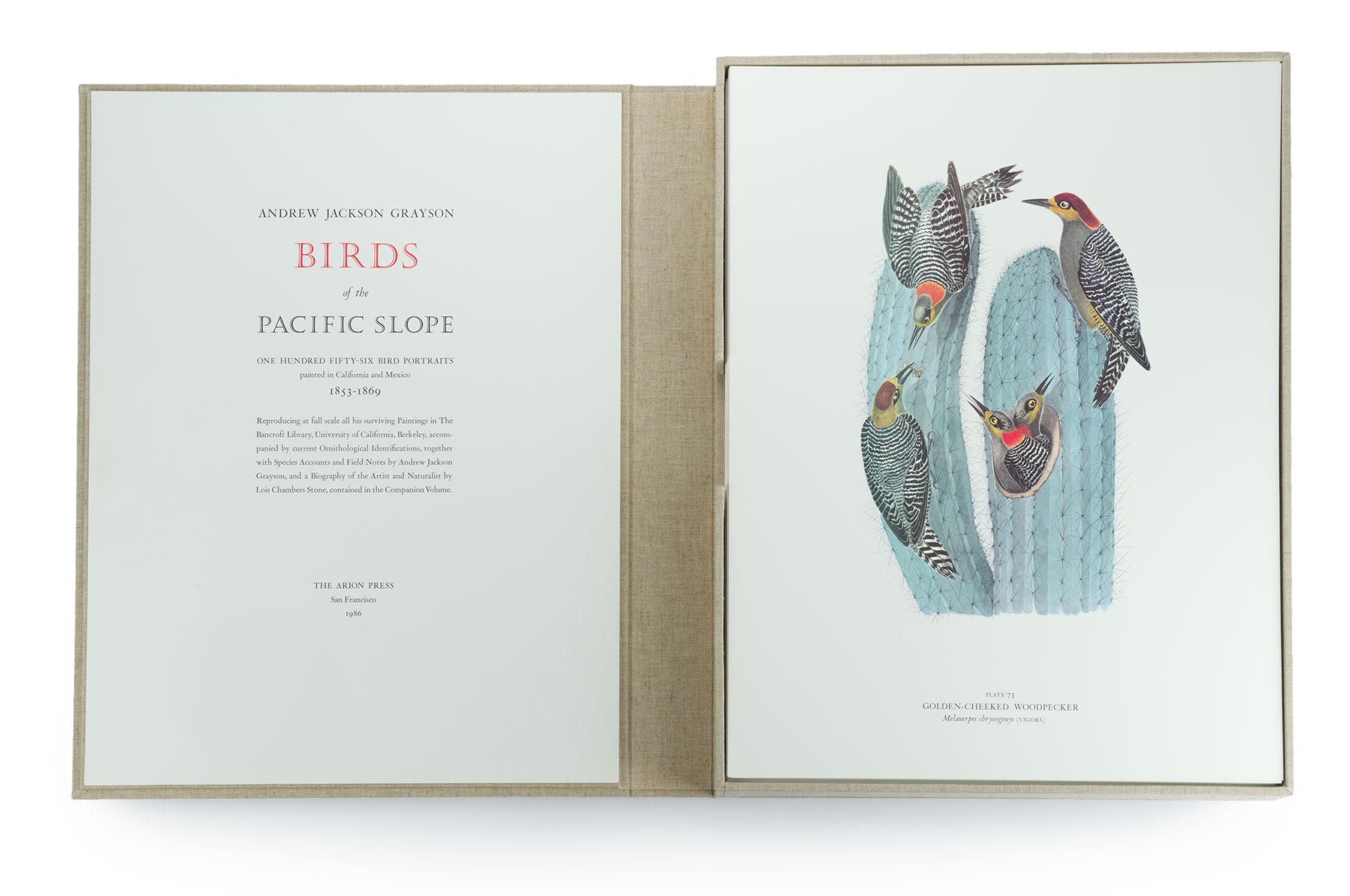 020_Birds-of-the-Pacific-Slope.portfolio.05.jpg