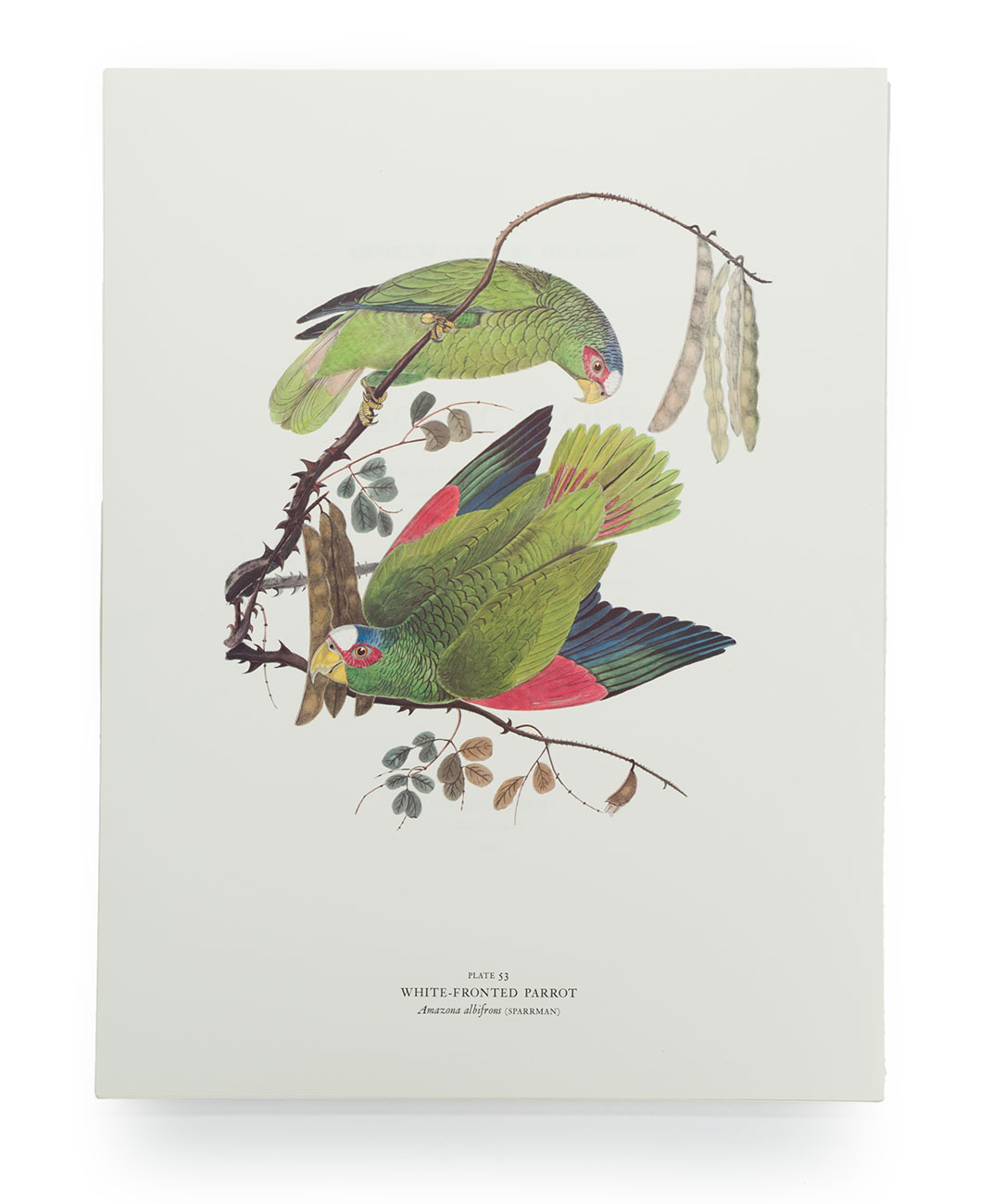 020_Birds-of-the-Pacific-Slope.print.07.jpg