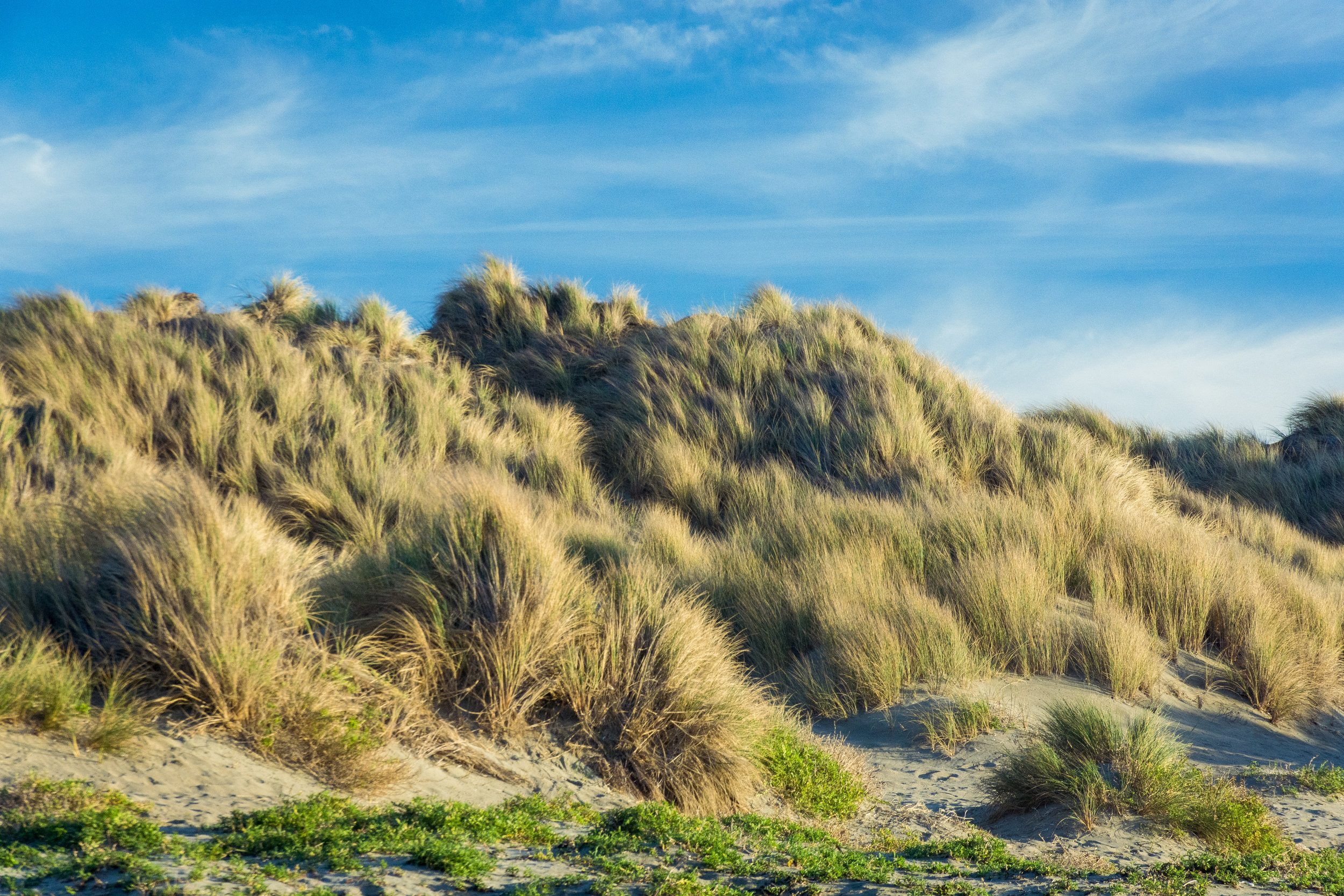 Landscape-42.jpg