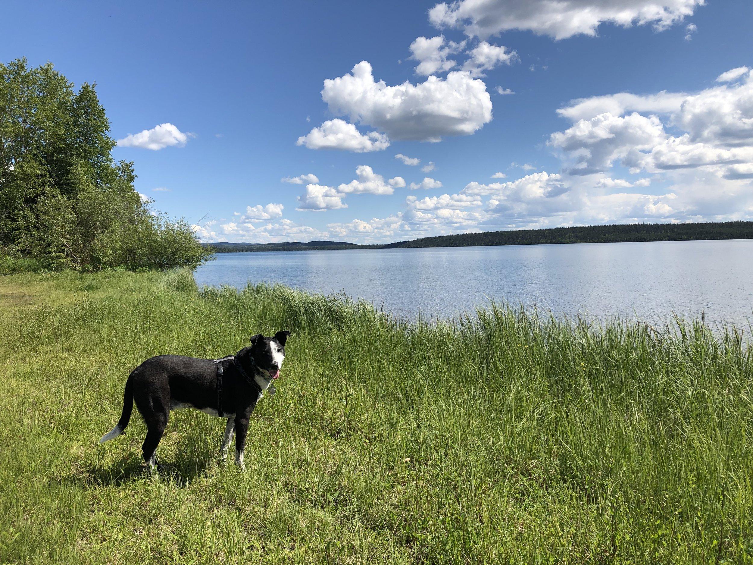 Cosmo at Watson Lake in the Yukon Territory of Canada.