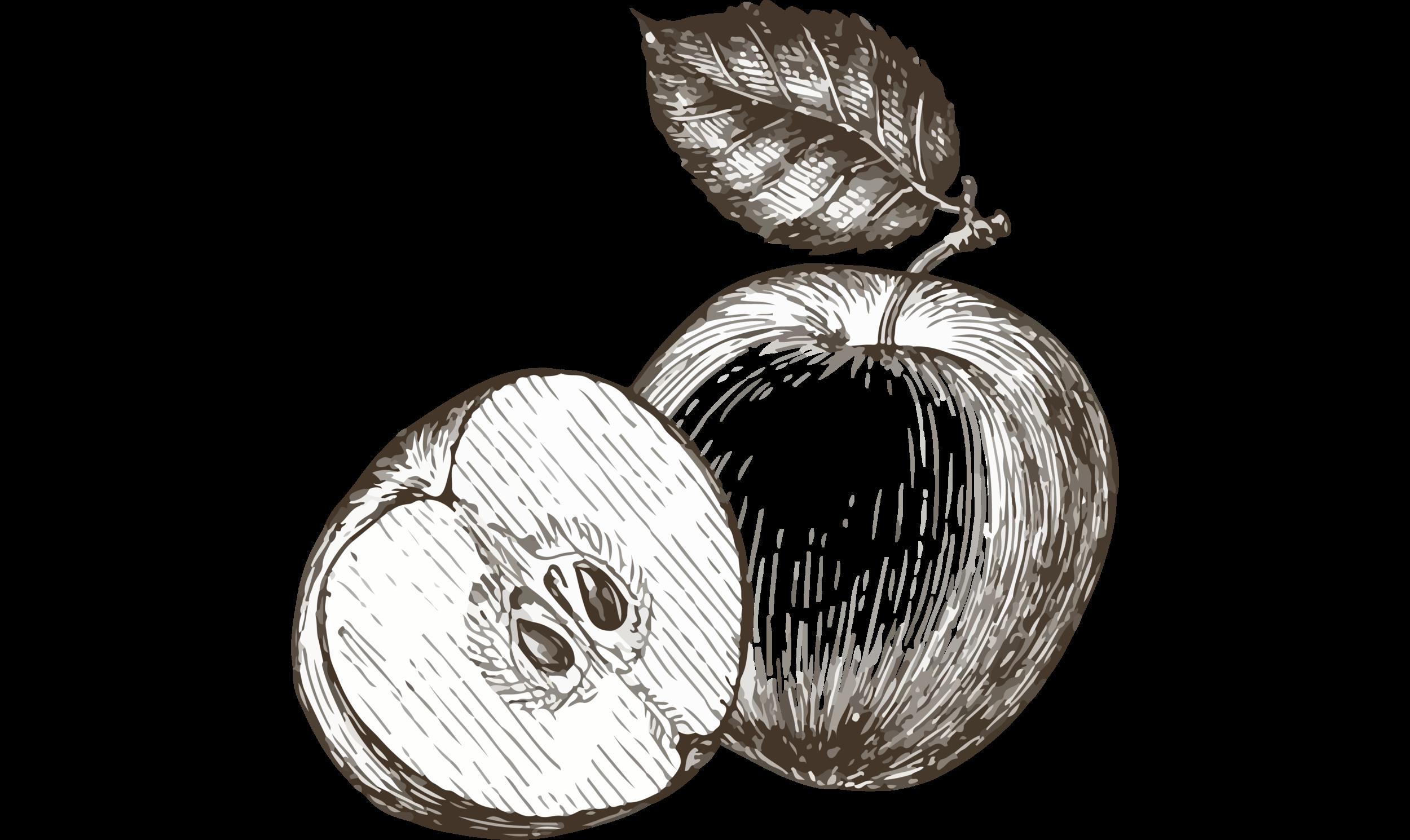 vintage apple_wide.png