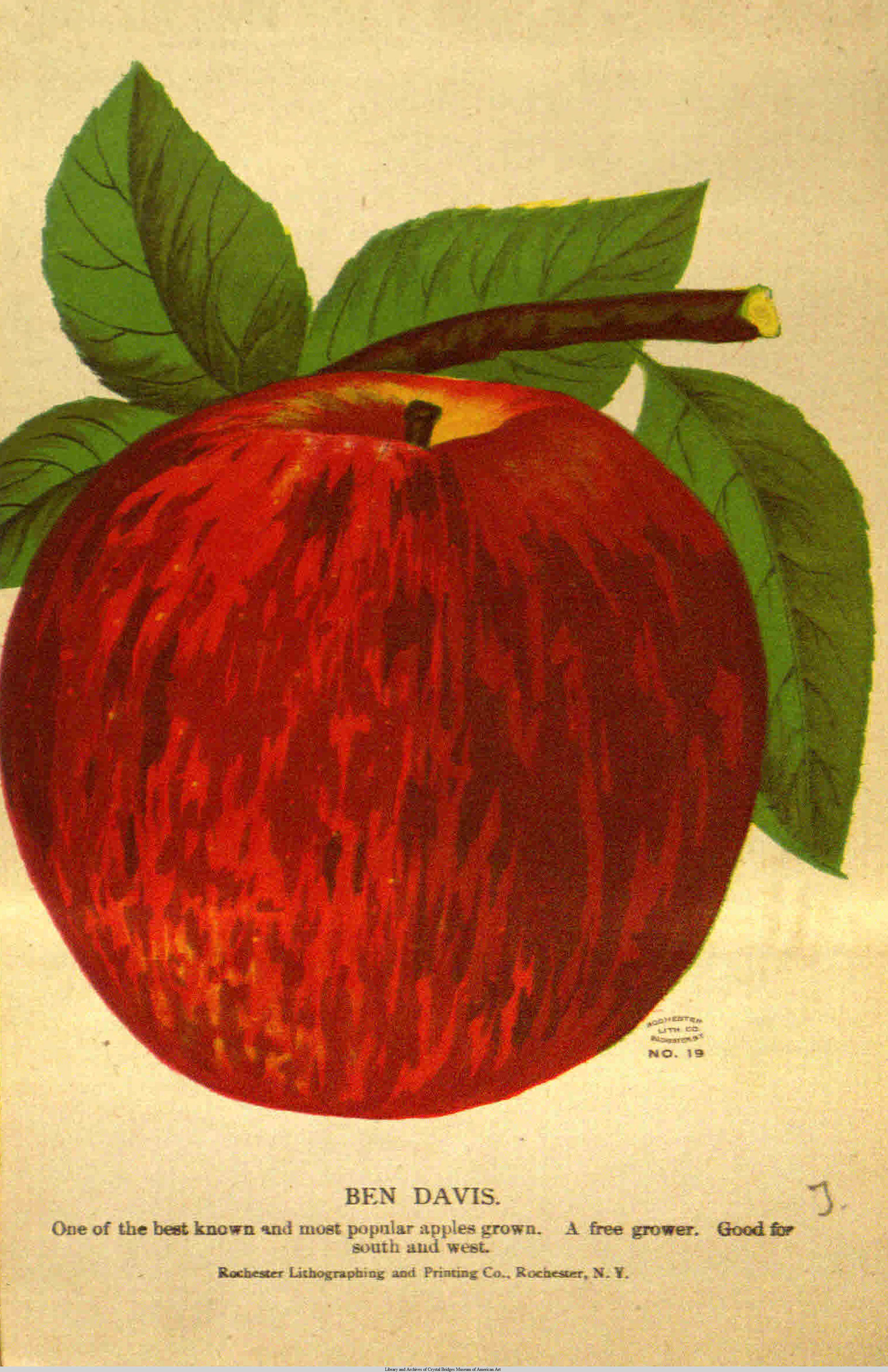 In 1922, the Ben Davis variety was the most widely planted apple in Boulder County. Photo courtesy of the Library and Archives of Crystal Bridges Museum of American Art.