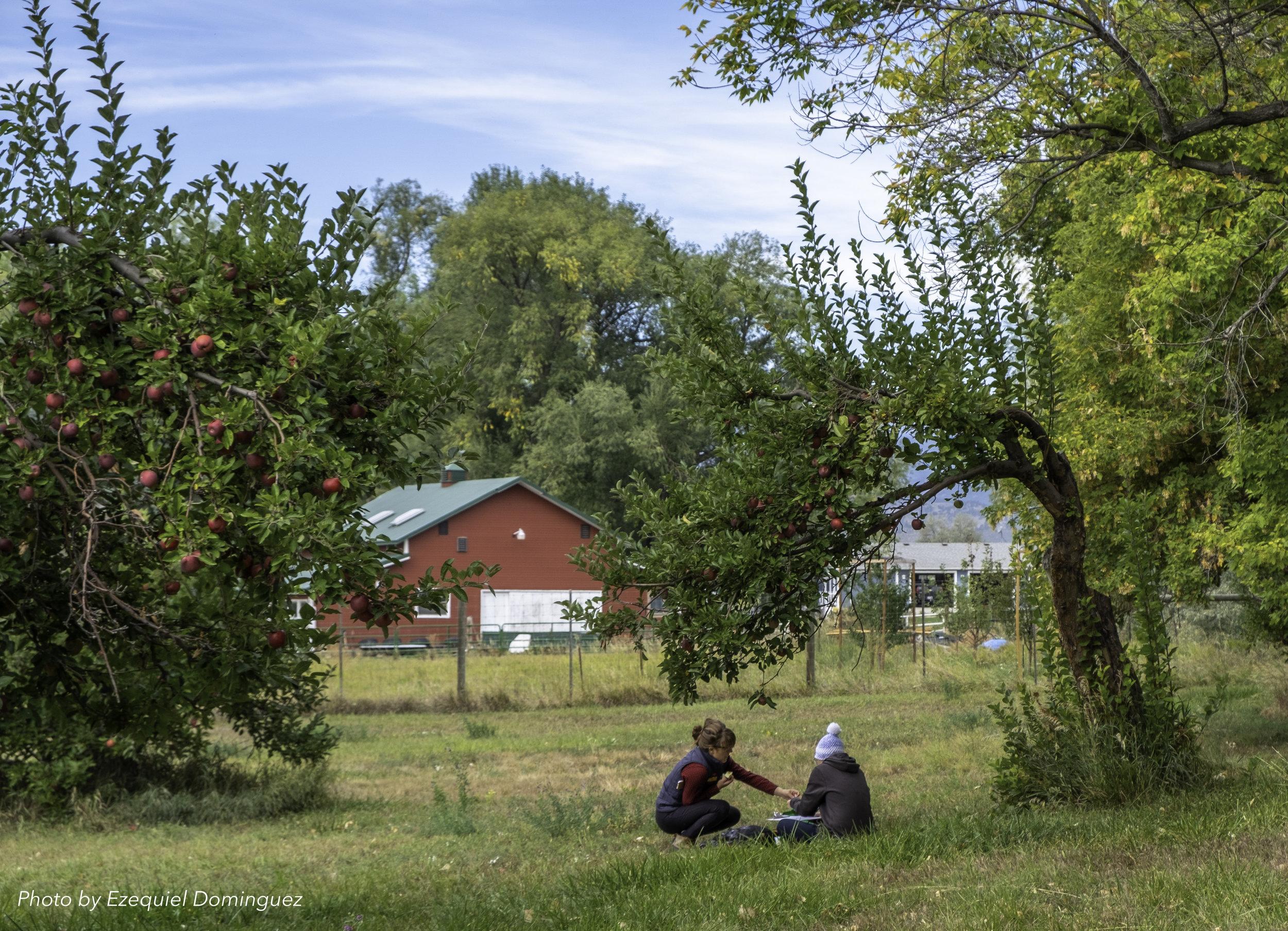 Amelia & Sarah surveying a historic apple orchard in Hygiene. Photo by Ezekiel Dominguez.