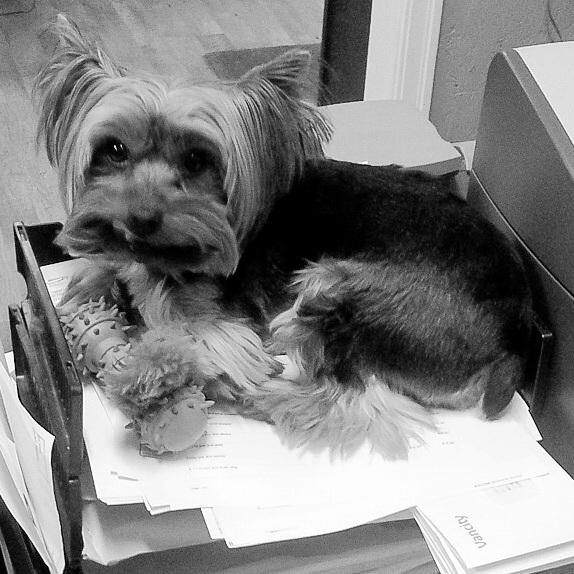 BRUIN  Office Support   woof@restruction.ca