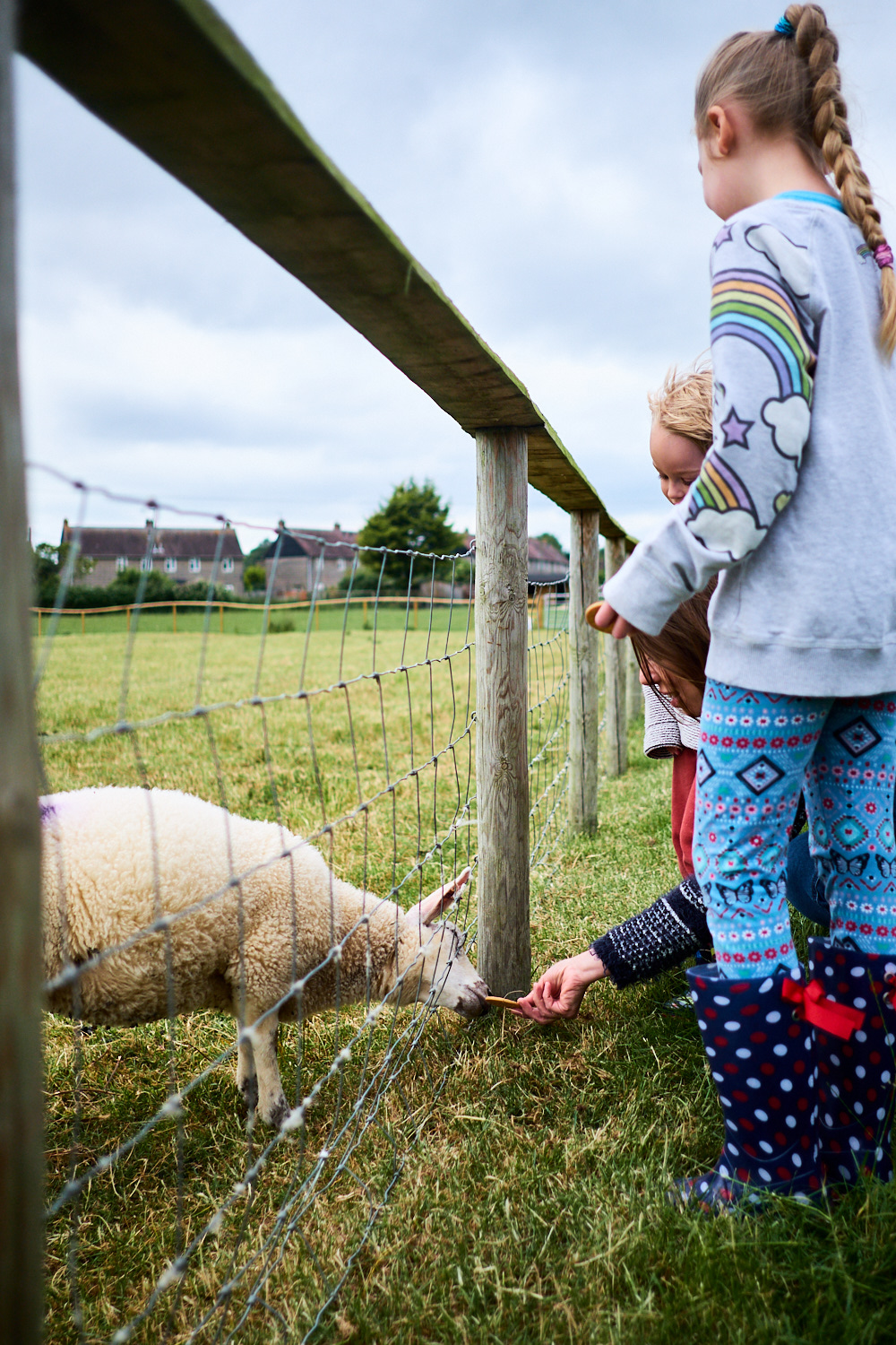 A young family petting a lamb at an animal sanctuary