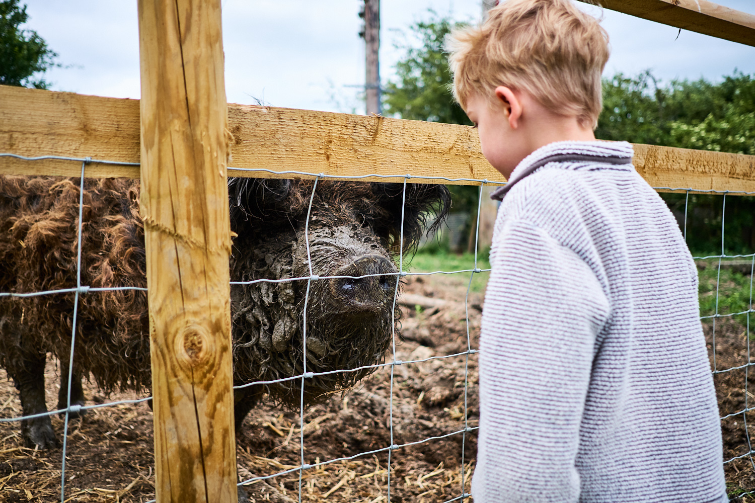 A young boy looking at a rescued pig at an animal sanctuary