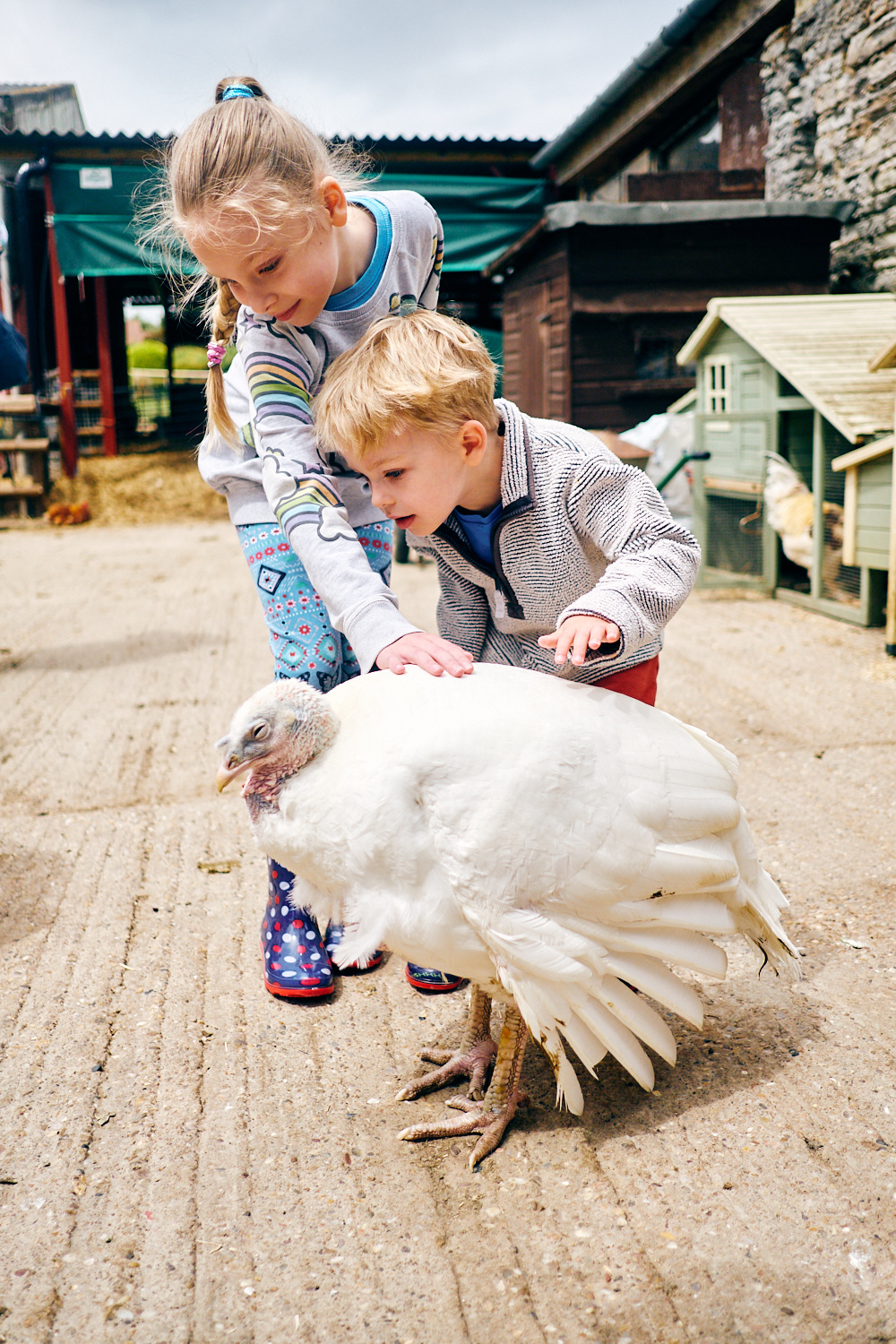 Children petting a rescued turkey at a sanctuary