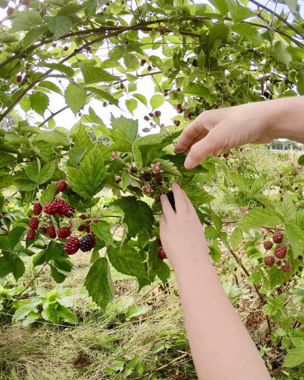 Fruit_picking2.jpg