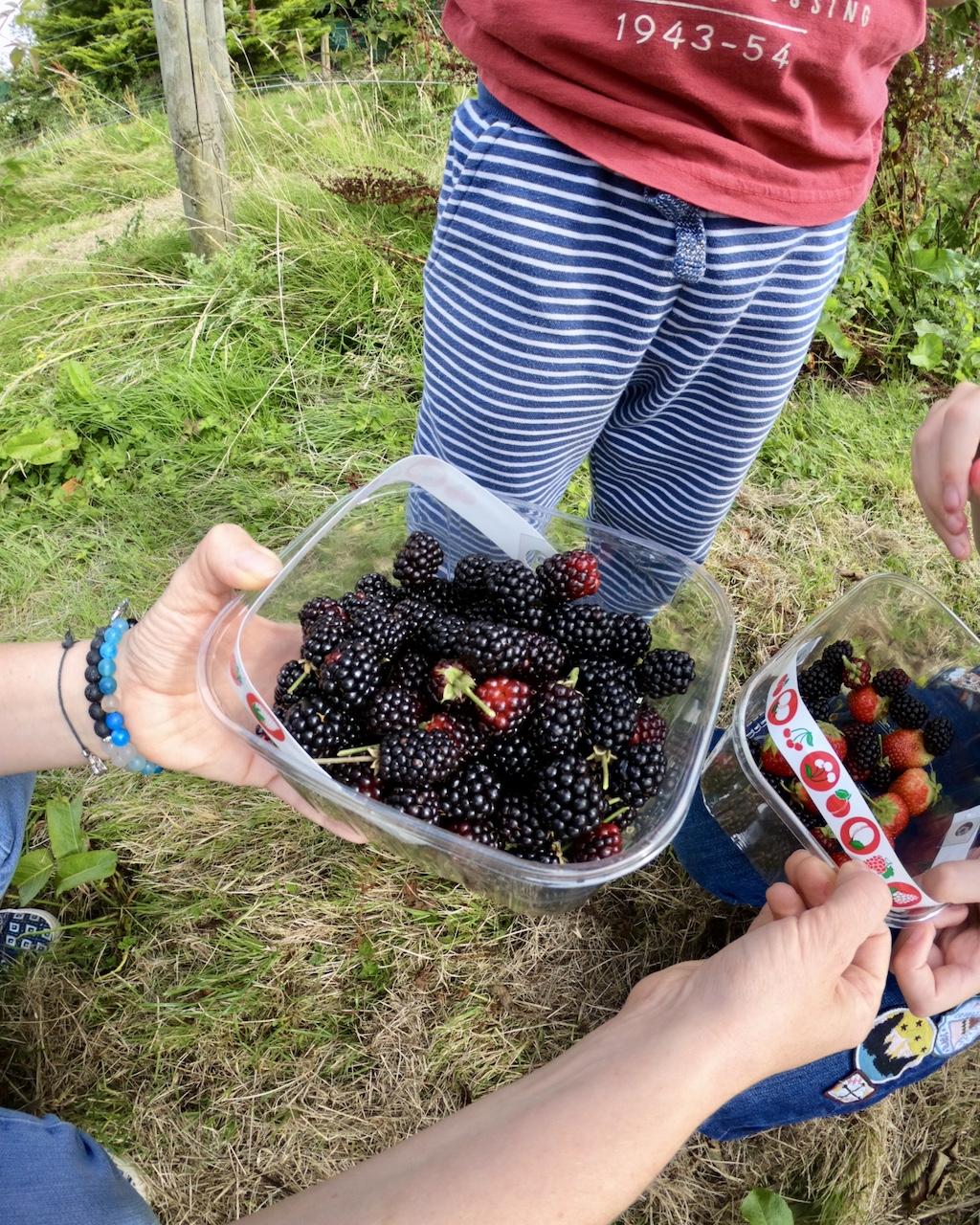 Fruit_picking4.jpg