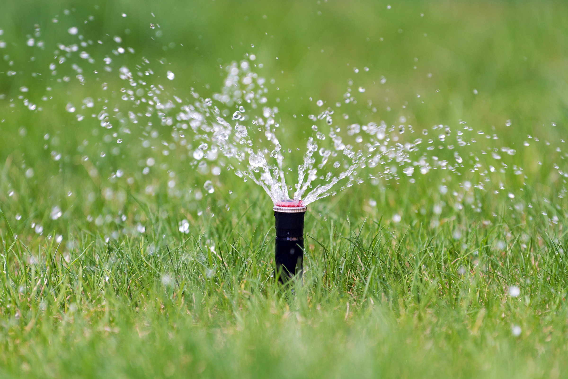 sprinkler-in-action-watering-grass-PXEKAZY.jpg