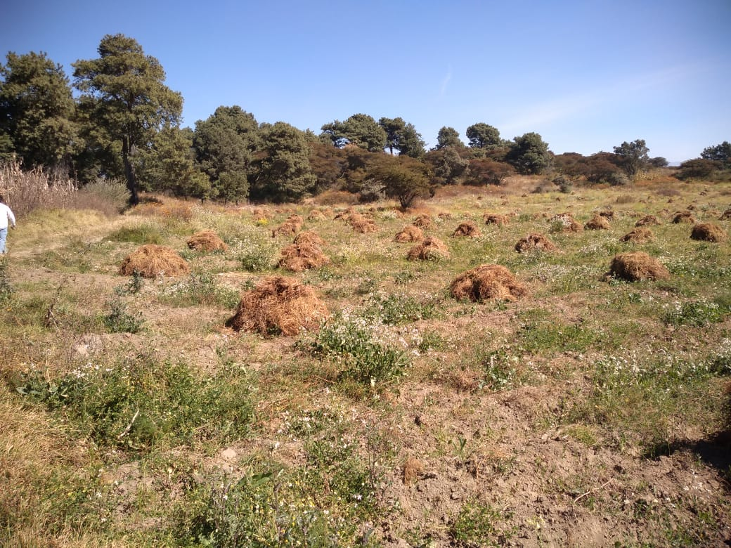Jan. 2019 - Chamomile Drying in the field (pic 4).jpg