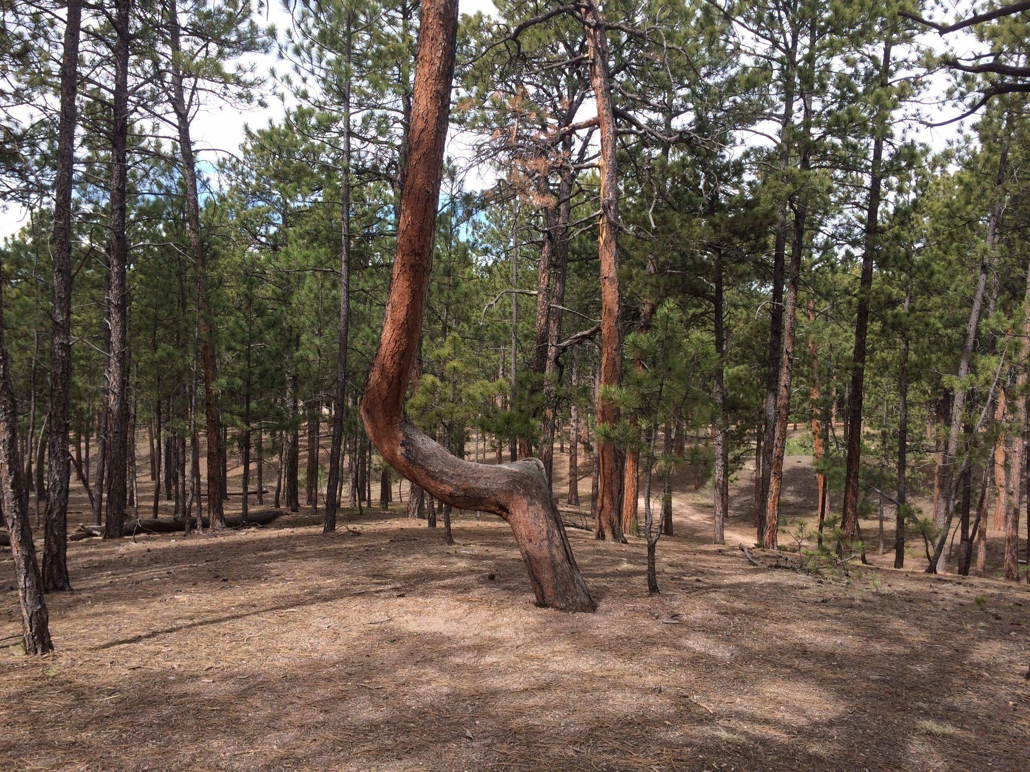 twisted trees1.jpg