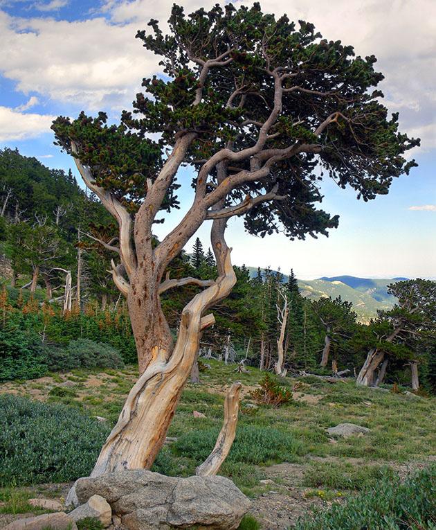 twisted trees4.jpg
