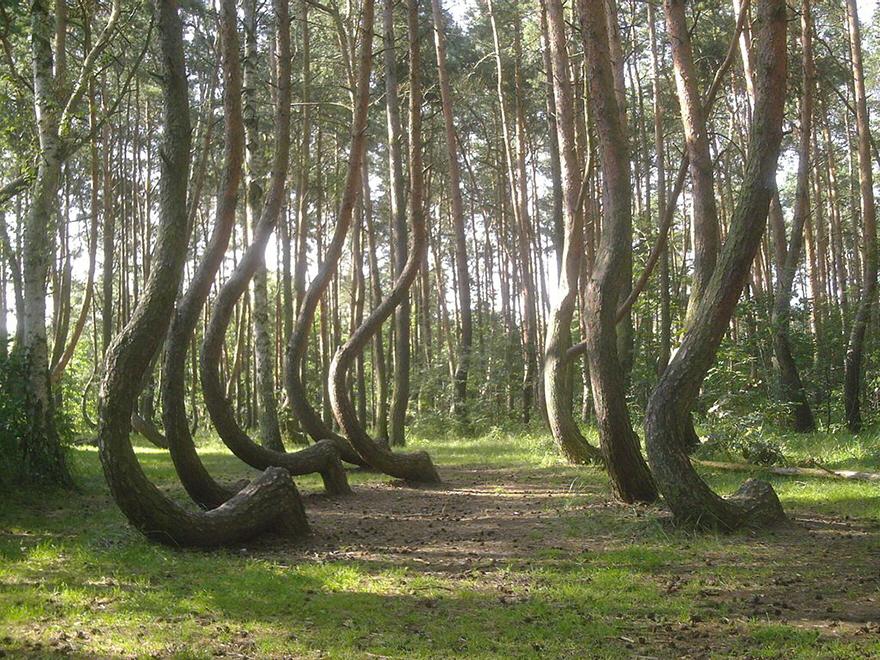twisted trees5.jpg