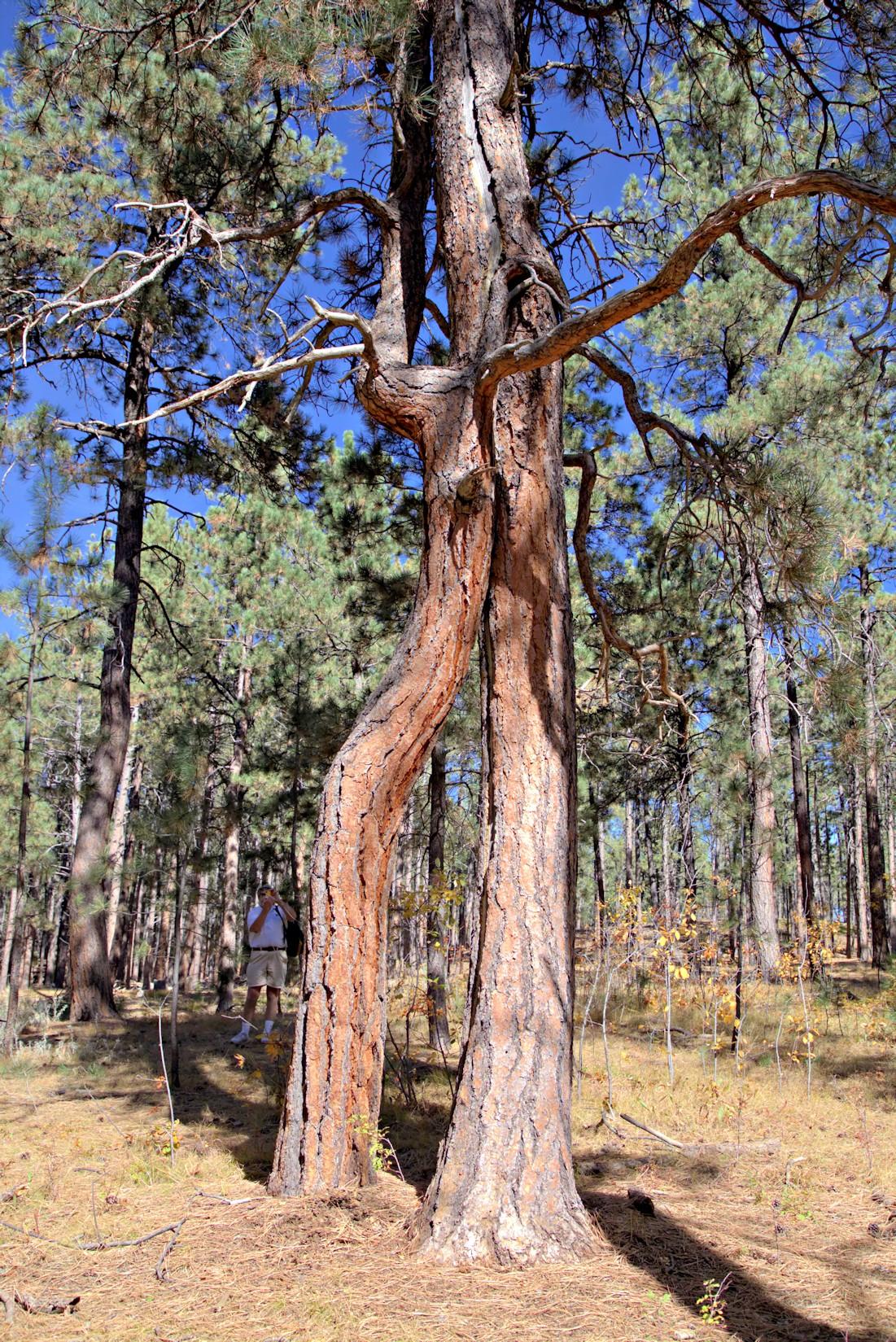 twisted trees7.jpg